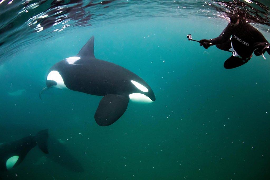 Cape Point, Pisces Divers Ocean Safari