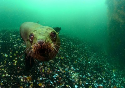 Seal and Kelp Dive Package in False Bay Cape Town with Pisces Divers
