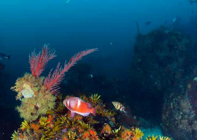 Wreck and Reef Dive Package in False Bay Cape Town with Pisces Divers